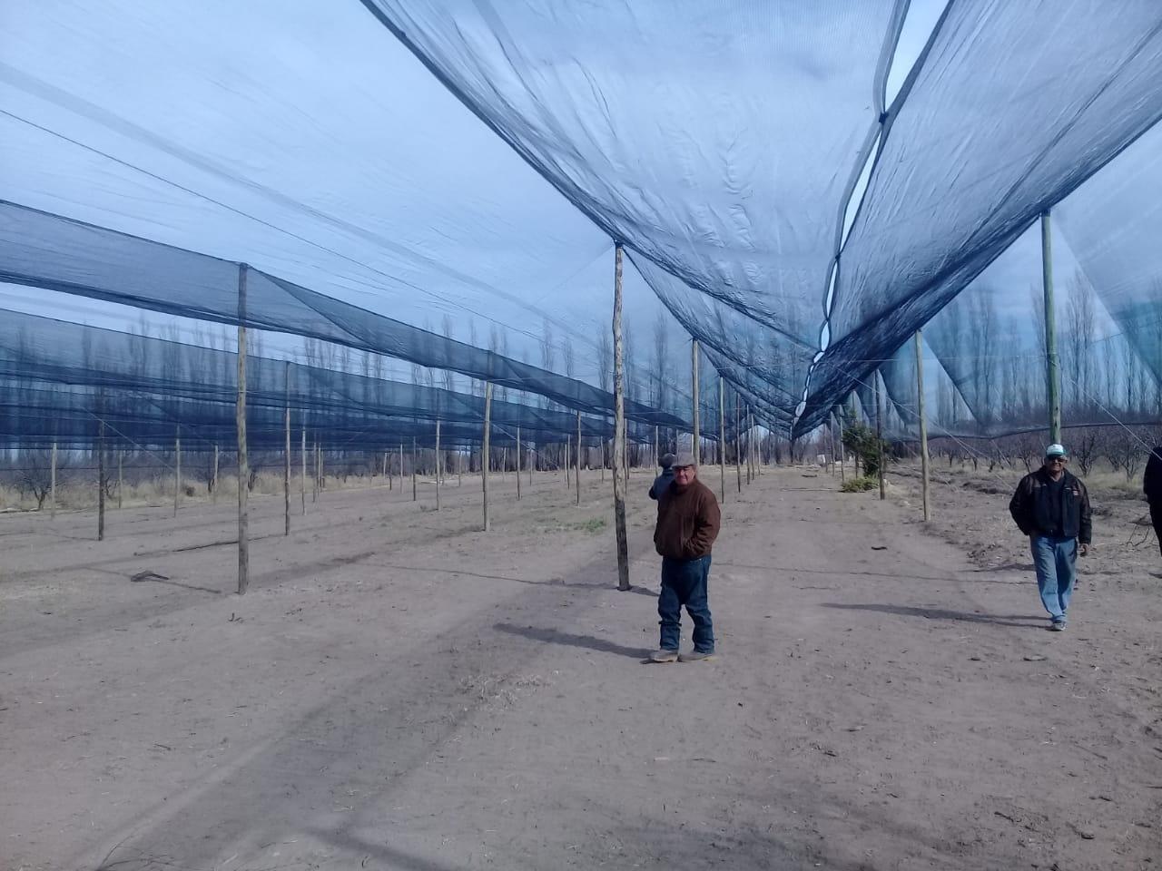 Real del Padre: 19 familias entelaron su  producción de hortalizas