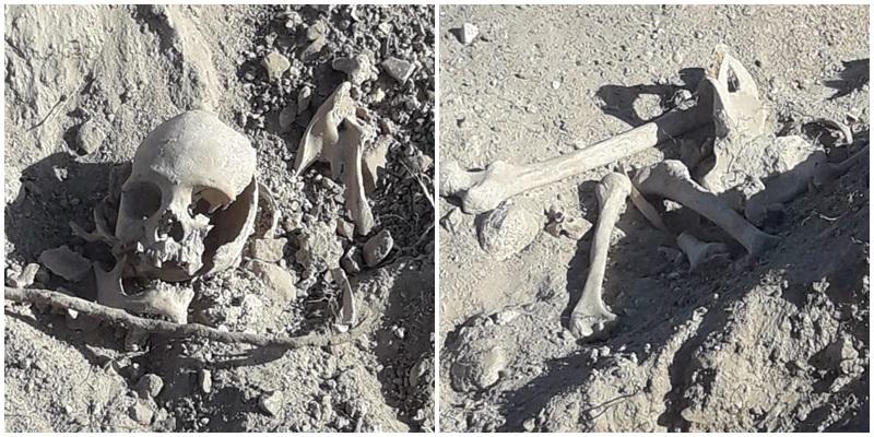 Hallaron un cráneo y huesos humanos en una finca de Cuadro Benegas