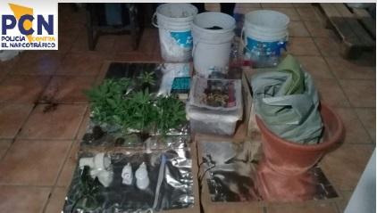 Allanaron una cabaña por cultivo de marihuana
