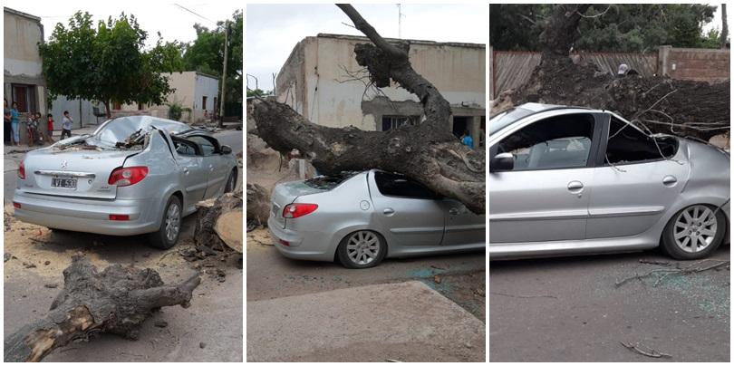 Ya había sido denunciado el árbol que ayer cayó sobre un auto