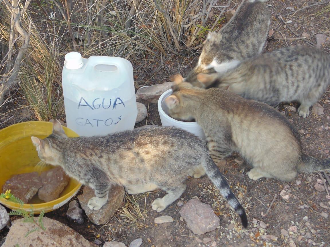 Una «manada» de gatos vive frente al submarino