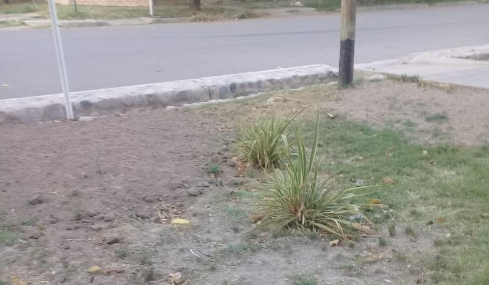 Plaza Centenario afectada por la falta de riego