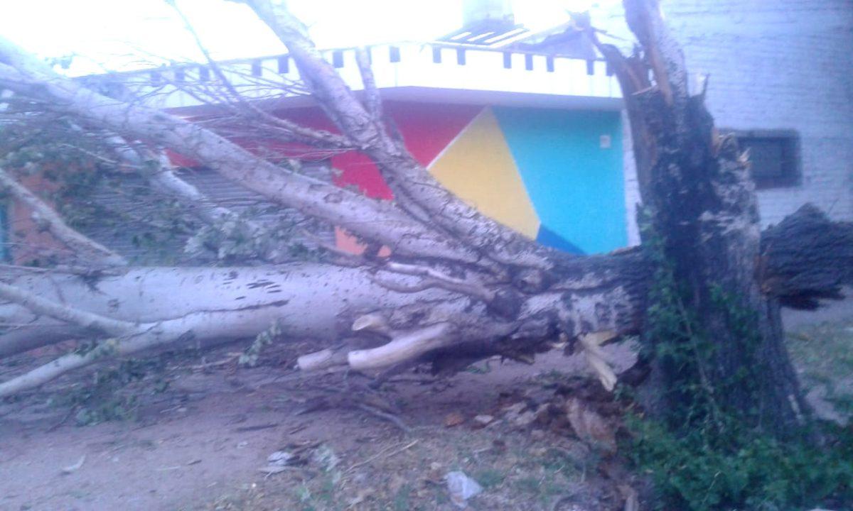 Más de 40 árboles caídos y 30 ramas grandes